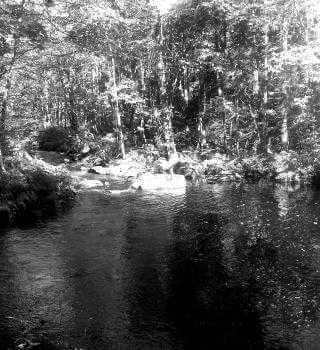 My Water Has a Taste & Odour | Halifax Water